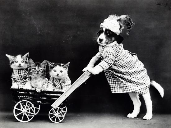 Кинологи рассказали, какие аксессуары не нужны собаке