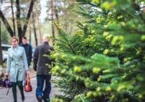 Как будет отдыхать Хабаровский край на майские праздники 2021: учеба, медицина, работа детских садов