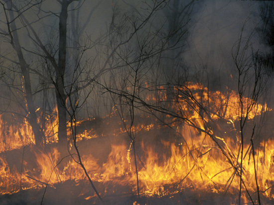 В лесах Архангельской области объявлен пожароопасный сезон