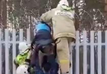 В городе Железногорске Красноярского края мужчина застрял на заборе, пытаясь попасть в закрытый город