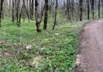 Дубы и грабы на миллионы рублей вырубили в Железноводске на продажу