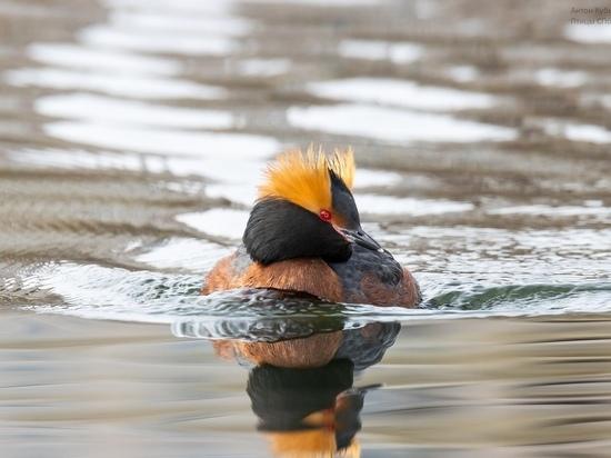 В Петербурге заметили четыре вида редких птиц из Красной книги