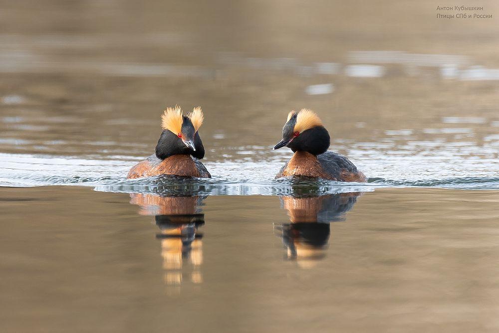 Фотограф из Петербурга за два дня запечатлел представителей четырех видов краснокнижных птиц