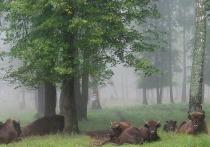 Приокско-Террасный заповедник пригласил гостей на майские праздники