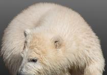 Медвежонка, спасенного в Красноярском крае, реабилитируют в Московском зоопарке, передают «РИА Новости»
