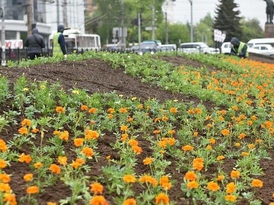 82 тысячи цветов украсят Киров в этом году