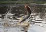 Угроза экологической катастрофы нависла над Амурской областью
