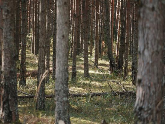 8,6 тысяч деревьев высадили в Печорском районе в рамках акции