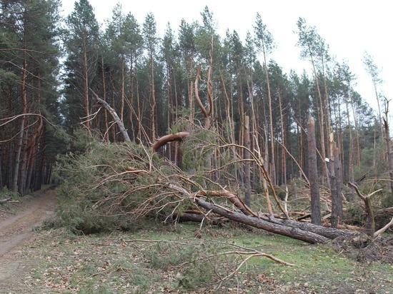 Южноуральцев предупреждают о штормовом ветре