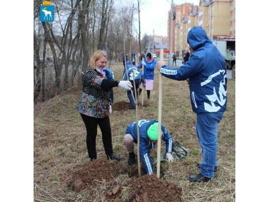В Йошкар-Оле посадили 76 каштанов