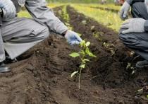 Компания «Татнефть» посадит в 2021 году 5 млн. деревьев