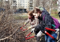 Горожане высадили дубы и клёны в парках Петрозаводска