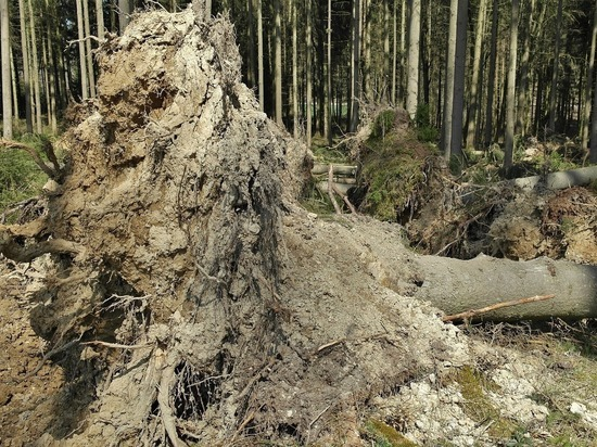В Нижегородской области поднимается ветер