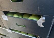 В Оренбуржье задержали 20 тонн польских яблок