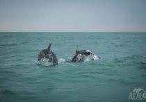 Пятнистого дельфина обнаружили в море в Сочи