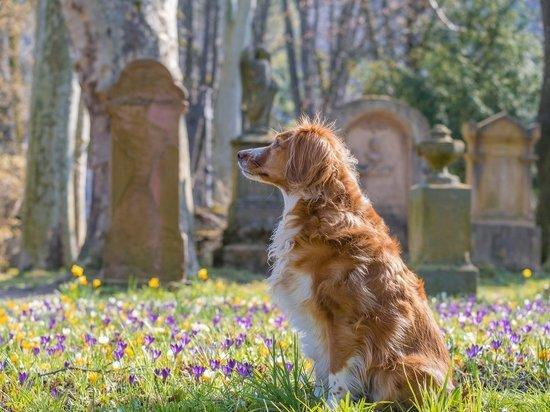 Стало известно, появится ли кладбище для домашних животных в Пскове