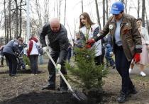 В память о ветеранах Великой Отечественной войны в Кузбассе высадят полмиллиона деревьев