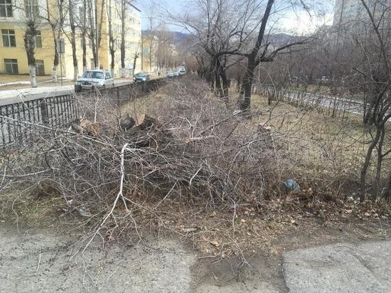 Власти Читы пообещали восстановить все зеленые насаждения на Горького
