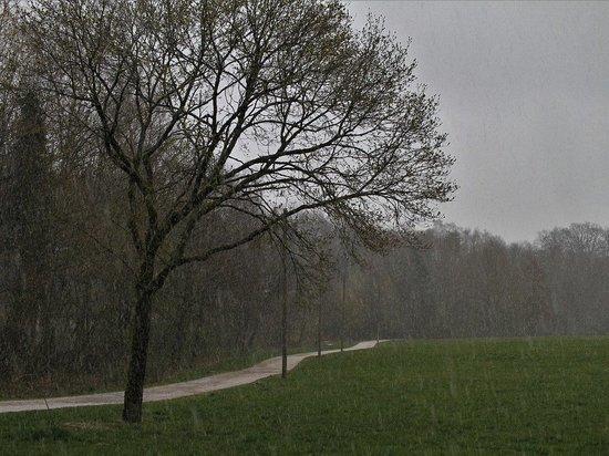 Какой погоды ждать во Владимирской области 3 мая