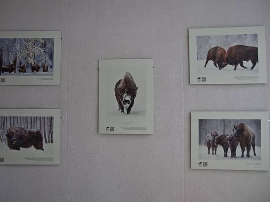 В Москве открылась выставка Приокско-Террасного заповедника