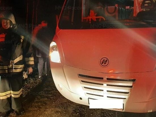 В Калужской области автобус сбил косулю
