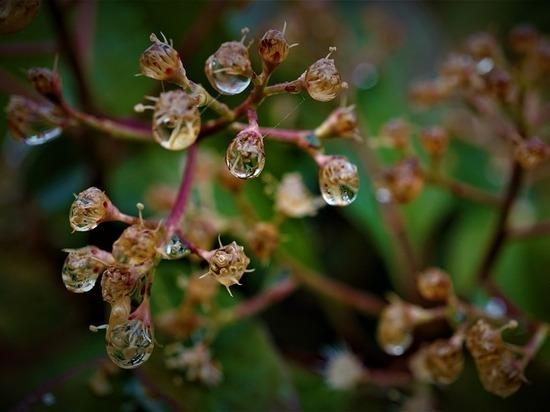 Вслед за аномальными ливнями на Калугу обрушится майское тепло