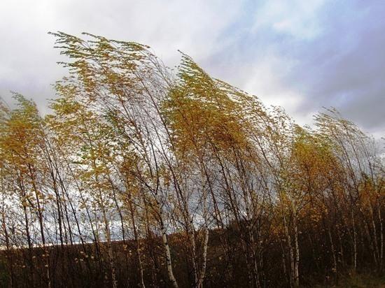 3 мая в Рязанской области выпустили метеопредупреждение из-за ветра