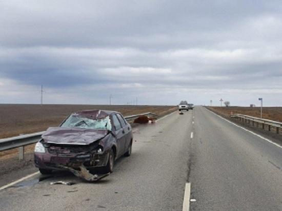 На калмыцкой дороге причиной аварии стала корова