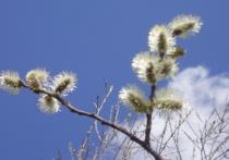 Ах, май! Весна уже полностью в своих правах - вокруг молодая травка и первая зелень на деревьях, пока еще нет ни комаров, ни гнуса - самое время для шашлыков и отдыха на природе