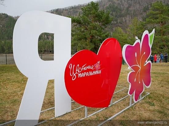 Как прошел праздник цветения маральника в Алтайском крае