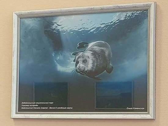 «Заповедное Подлеморье» устроило фотовыставку в аэропорту Бурятии