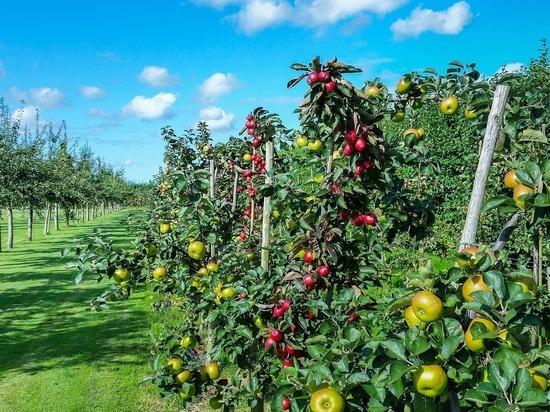 Сад имени Зои Космодемьянской появится в Тамбовской области