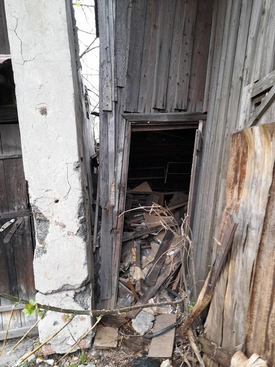 Тамбовчане спасли щенков из-под завалов сарая