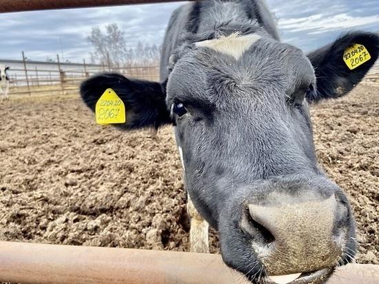 Кировская область вышла на четвертую позицию по реализации молока