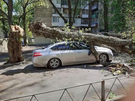 В центре Донецка на машину упало дерево