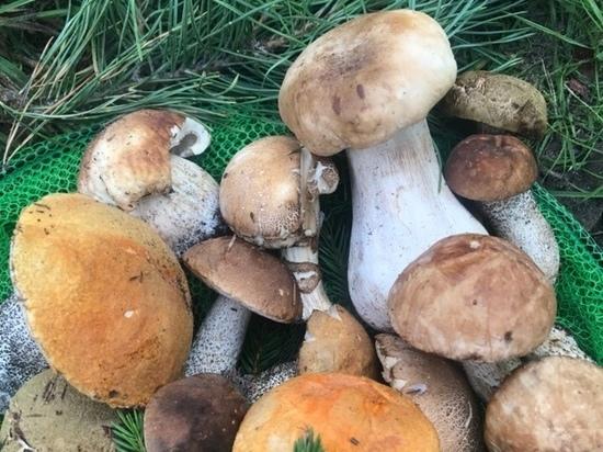 Есть много причин, по которым грибы обязательно должны присутствовать в рационе. Они содержит антиоксиданты, витамины, клетчатку и минералы.