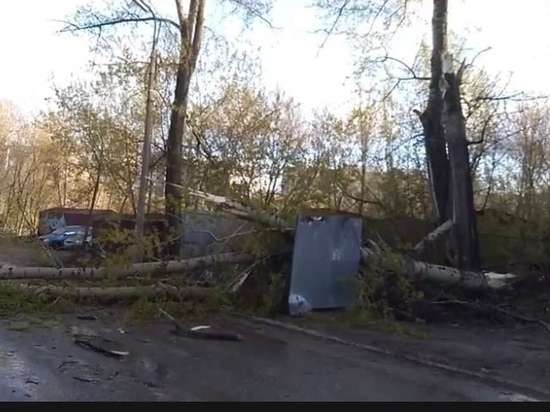 На улице Гоголя в Рязани дерево упало на пешеходный переход