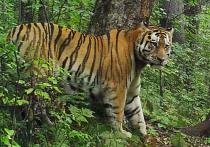 Человека называют основной причиной конфликтных ситуаций с дикими животными в Хабаровском крае