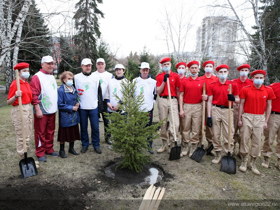 Более полумиллиона деревьев высадят в Алтайском крае ко Дню Победы