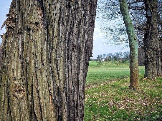 Проголосовать в конкурсе «Дерево года» призывает Минлесхоз Татарстана