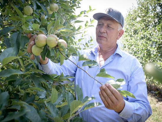 Один из лучших садоводов Кубани Александр Акимов уже пять лет пытается найти компромисс с газовиками