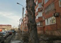 Автор омского паблика выразил негодование из-за очередной варварской обрезки деревьев