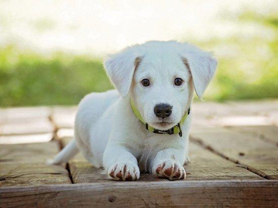 Брянские зоозащитники обвинили семью в поедании щенков