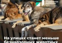 В Мурманской области будет разработана дорожная карта по уменьшению количества безнадзорных животных