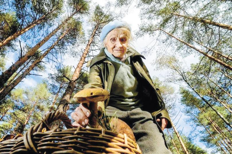 Сбор березового сока, грибов и иных даров леса строго регламентированы новыми правилами. Лучше с ними ознакомиться...