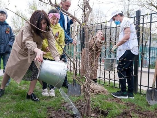 В Калуге в память о ветеранах высадили клены