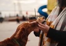В «Севкабель порте» создадут площадку для выгула собак