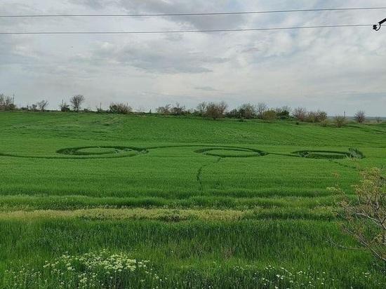 В станице Краснодарского края на поле нашли таинственные круги