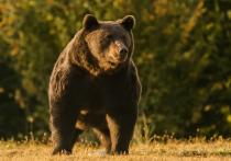 Принц Лихтенштейна, которого зоозащитные активисты обвинили в убийстве самого большого медведя в Евросоюзе, может подать на них в суд за клевету