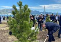В Новороссийске на территории мемориального комплекса «Малая Земля» в рамках международной акции «Кедры Великой Победы» высадили 80 молодых деревьев